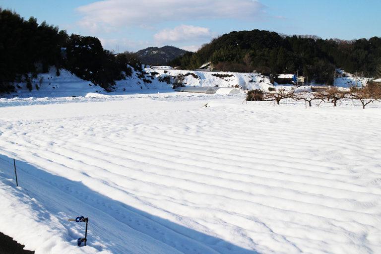 1月4日の田畑の雪化粧