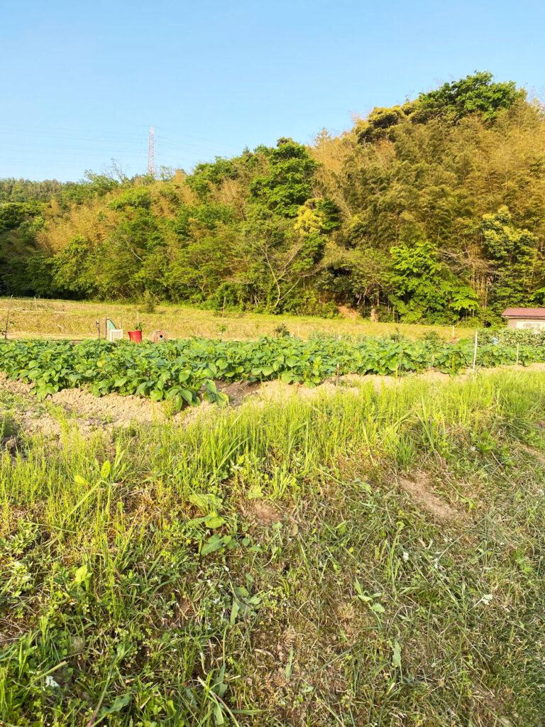 農産物発育状況の報告